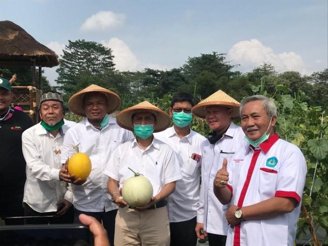 Kebun Agrowisata Unila Panen Perdana 25 Ton Melon