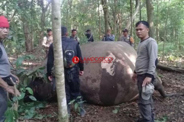 Kejari Lamtim Terima Pelimpahan Kasus Perburuan Liar di TNWK