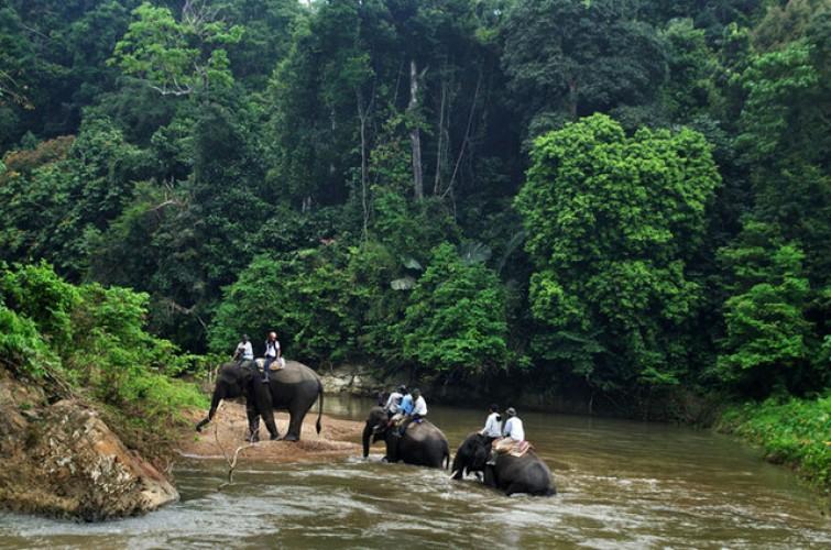 Kelola Hutan Konservasi untuk Manfaat Daerah