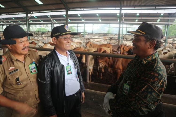 Kementan Salurkan 1.430 Sapi Indukan ke Sumatera