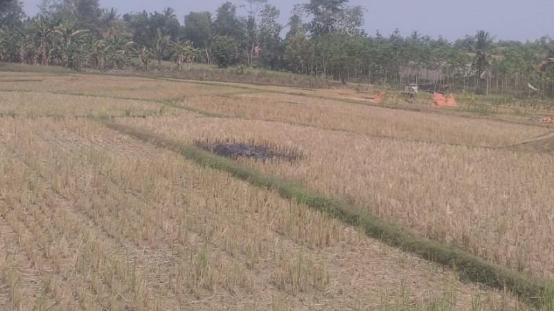 Kesulitan Air Saat Kemarau, Petani Sawah Tadah Hujan Harapkan Bantuan Pompa Air