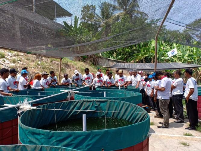 Ketua APCI Gencar Berikan Pelatihan Budidaya Ikan Lele-Patin Sistem Bioflok