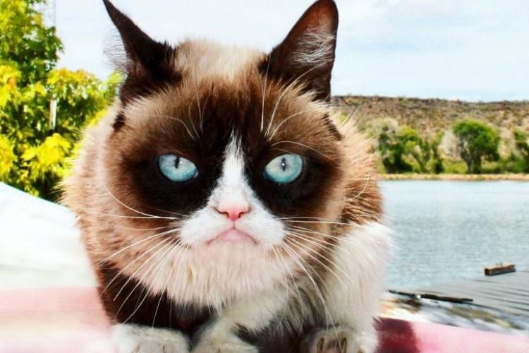 Komplikasi, Grumpy Cat si Kucing Selebgram Telah Tiada