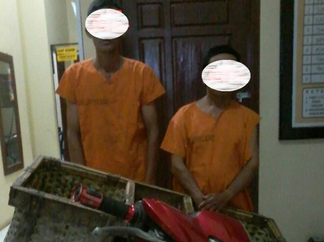 Komplotan Pencuri Sapi Modus Disembelih Dibekuk Jajaran Polres Lambar