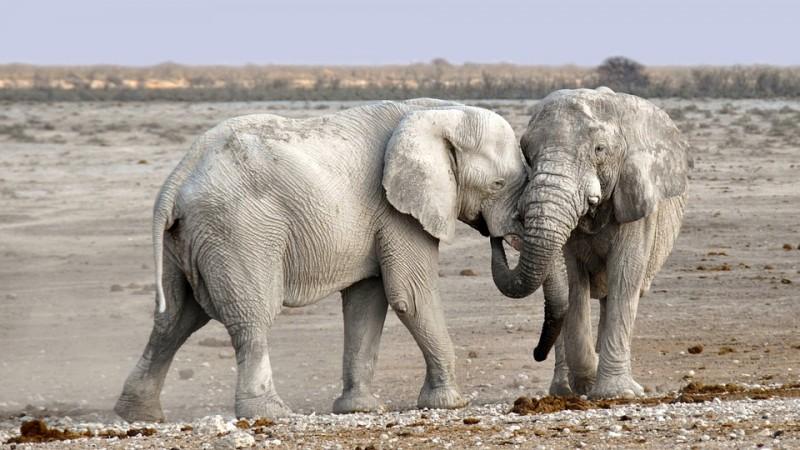 34 Keluarga akan Dipindah karena 'Ribut' dengan Gajah
