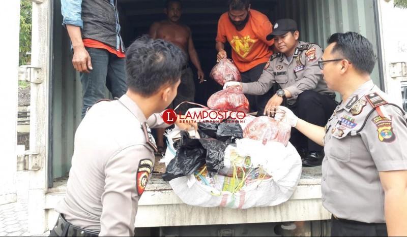 KSKP Bakauheni Gagalkan Penyelundupan 600 Kg Daging Celeng