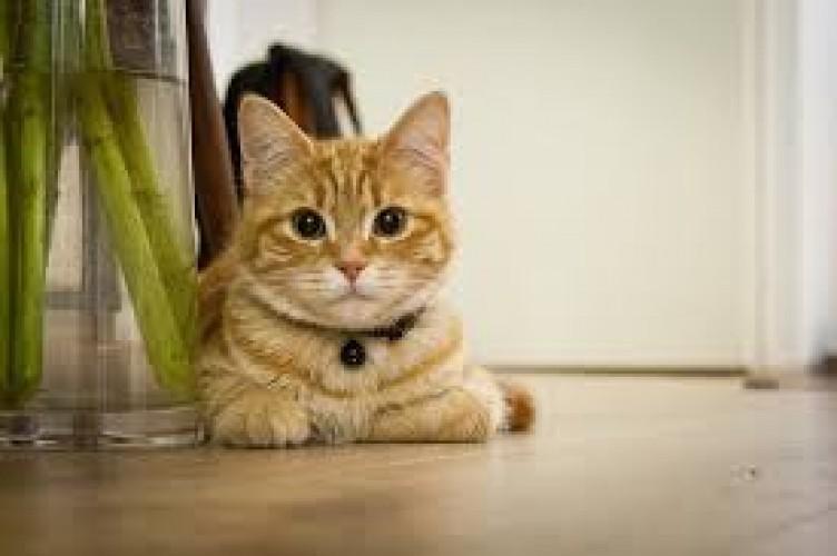 Kucing Dekat dengan Pemiliknya