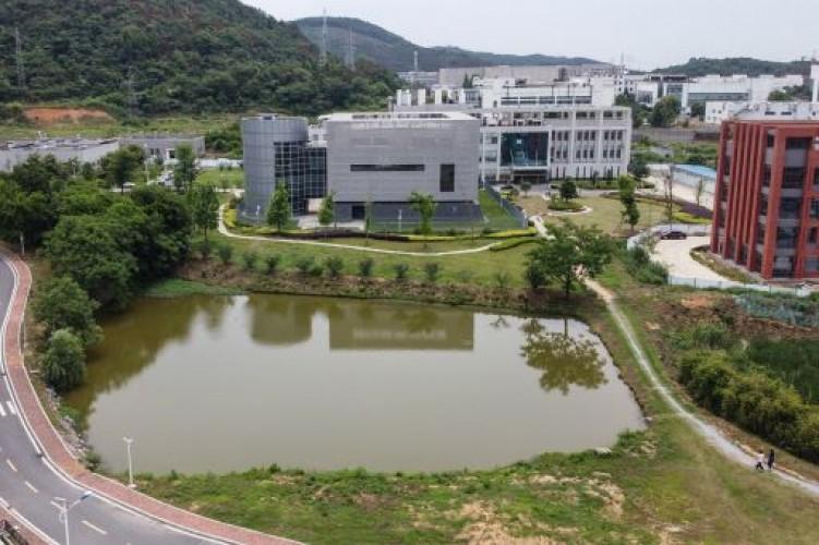 Lab di Wuhan Miliki Tiga Kelelawar Bervirus Korona