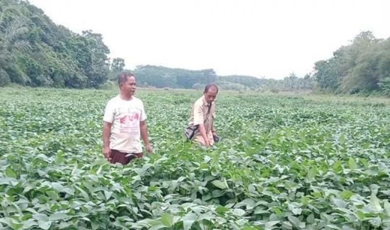Lahan 2.580 Hektare Fokus Tanam Kedelai