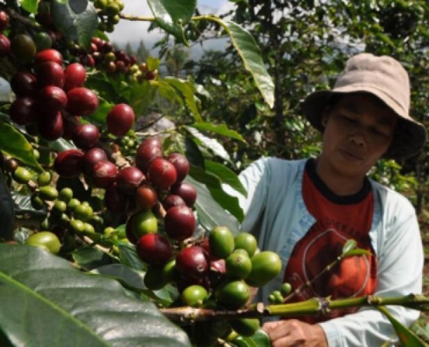 Lambar Tahun ini Alokasikan Rp2,947 Miliar untuk Perkebunan dan Peternakan