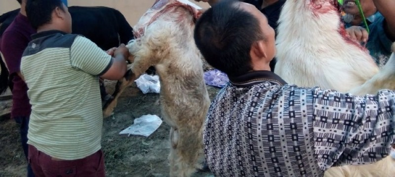 LAMPOST TV: PWI Tulangbawang Potong Hewan Kurban