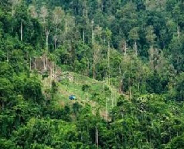 Lampung Hijau untuk Kelestarian Hutan dan Kesejahteraan
