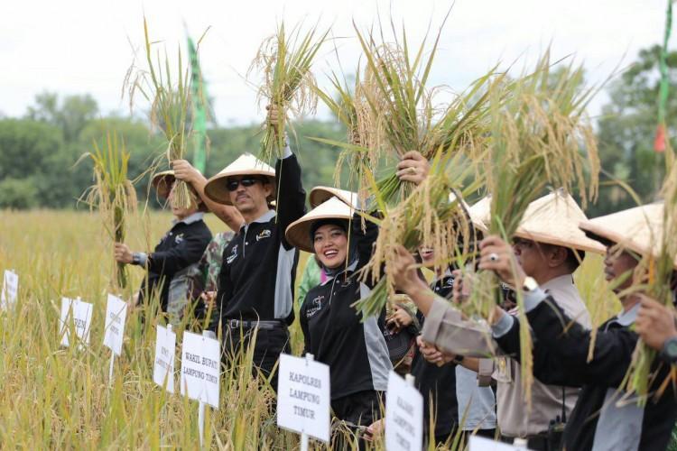 Lampung Prioritas Pertanian Nasional