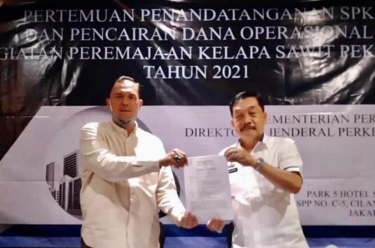 Lampung Remajakan 3.000 Hektare Lahan Sawit Tahun Ini