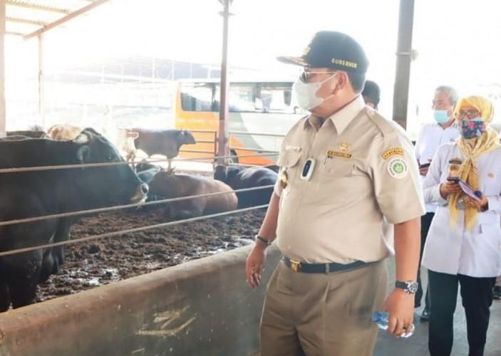 Lampung Sediakan 65.921 Ekor Sapi Kurban