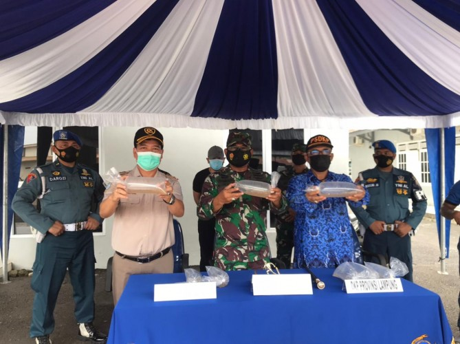 Lanal Lampung Gagalkan Penyelundupan 170 Ribu Benur Ilegal