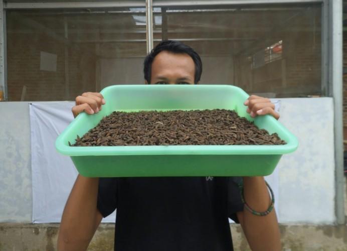 Maggot Efektif Atasi Sampah Organik di Bandar Lampung