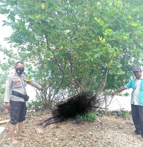 Mayat Membusuk Ditemukan di Pantai Queen Artha