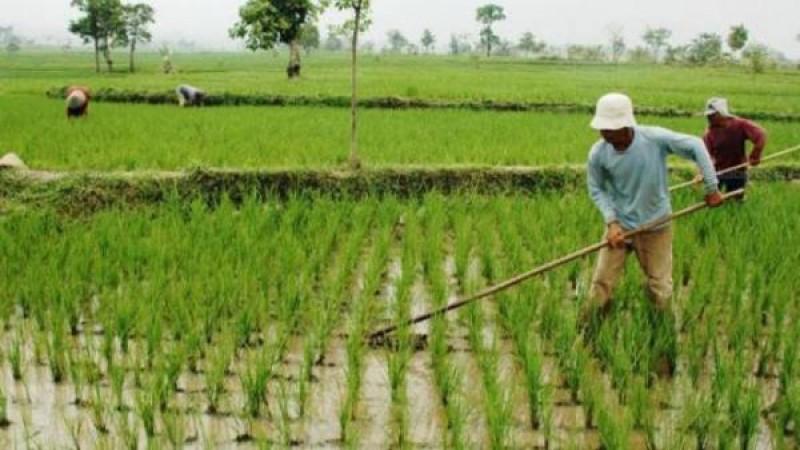 Mengolah Lahan Pertanian dengan Kearifan Lokal
