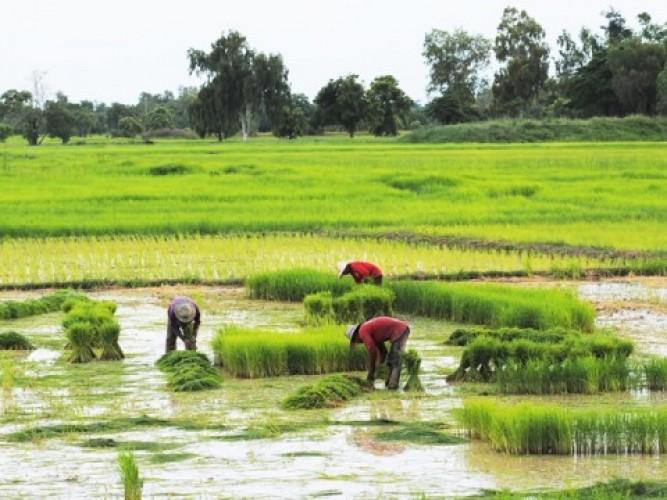 Mentan Dorong Petani Gunakan Asuransi