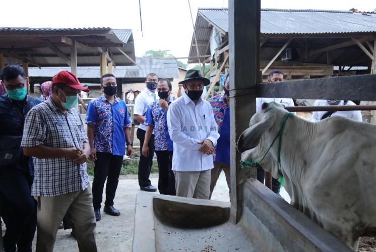 Menteri Teten Dorong Peternak Lampung Bentuk Holding Usaha Koperasi