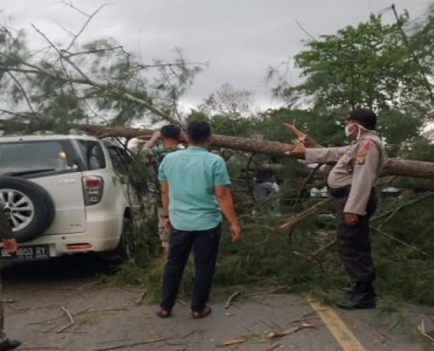 Minibus Tertimpa Pohon Tumbang di Jalinbar Tambakrejo