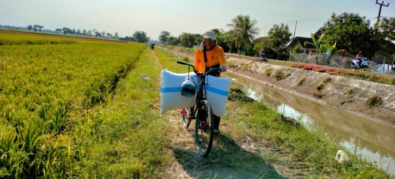 Musim Panen Berkah bagi Ojek Sepeda Manol