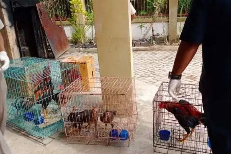 Musim Hujan, Warga Diminta Waspadai Flu Burung