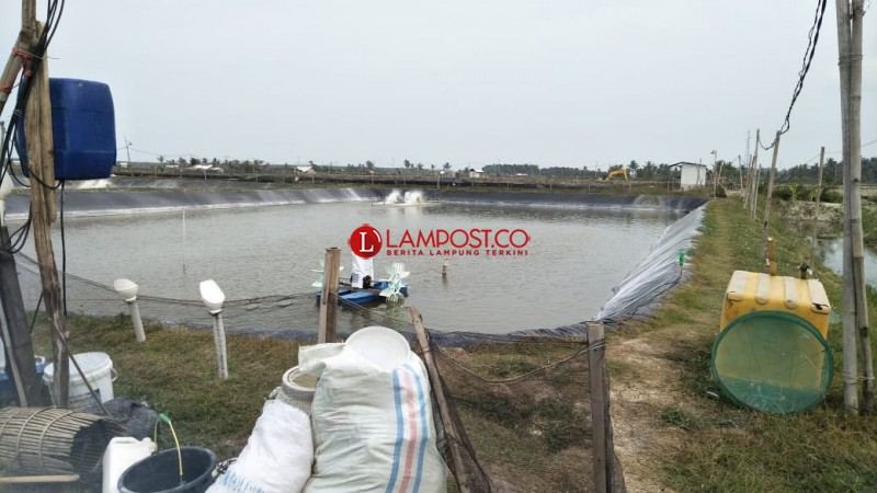 Mutiara dan Udang Lampung Bisa Dilirik Jepang