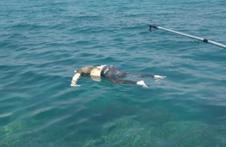 Nelayan Rajabasa Temukan Mayat Pria Mengambang di Laut