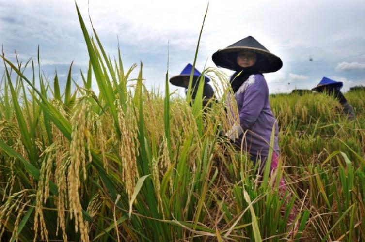 Nilai Tukar Petani Lampung Lebih Unggul dari Provinsi Lain