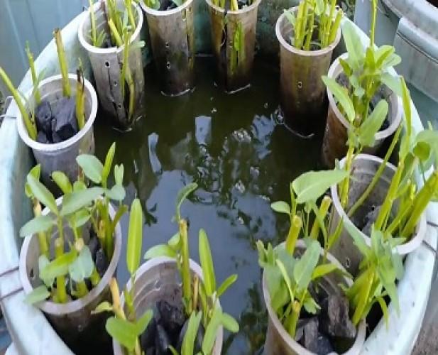 Nunik Dukung Budi Daya Ikan Dalam Ember