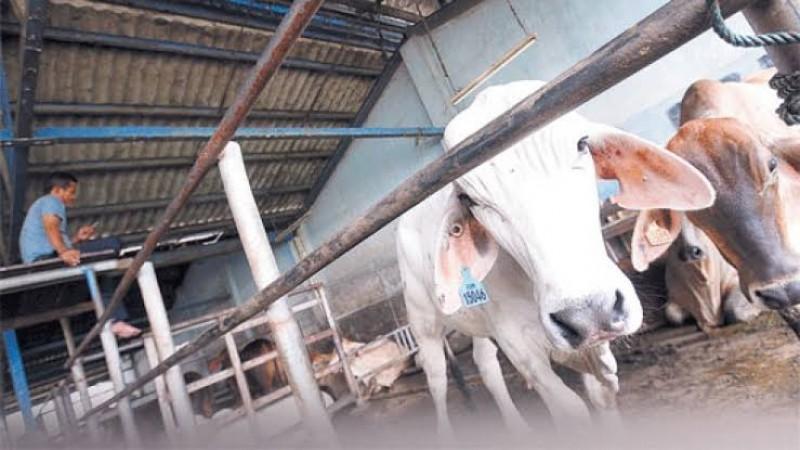 PAD RPH di Lampung Selatan Lebihi Target