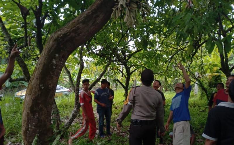 Panjat Pohon Durian, Pelajar SD ini Tewas Tersengat Listrik