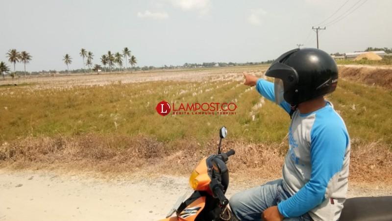 Pasang Surut Air Laut Bikin Pasokan Air ke Sawah Sragi Tersendat