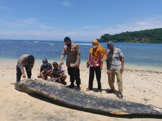 Paus Lima Meter Mati Terdampar di Pantai Tengor Cukuh Balak