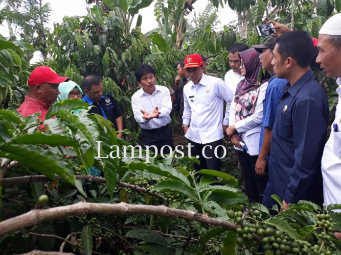 Pembangunan Agrowisata Pekon Rigisjaya Capai 30%