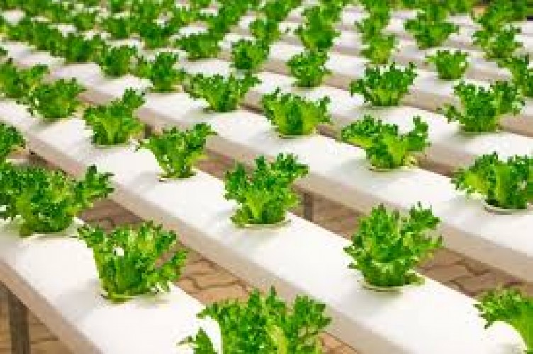 Pemerintah Bakal Tingkatkan Ekspor Produk Organik
