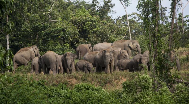 Pemkab Lambar Buka Dapur Umum untuk Korban Gajah Liar