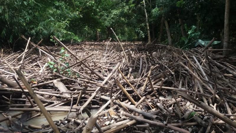 Pemkab Lamsel Didesak Atasi Sampah Sungai Way Pisang