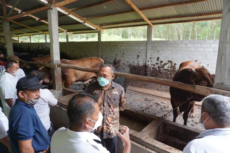 Pemkab Sarolangun Belajar Pengembangan Sapi Limosin di Tubaba