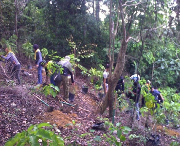 Pemkab Tanggamus Meminta Dukungan Pemprov Reboisasi Hutan