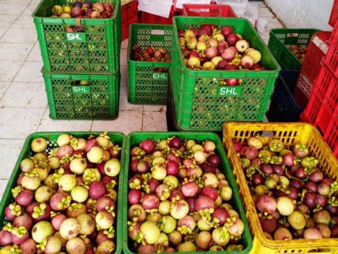 Pemkot Bandar Lampung Gali Potensi Ekspor Manggis