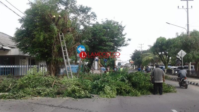 Pemkot Metro Pangkas Pohon Besar di Pinggir Jalan