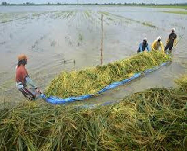Pemprov Siapkan Langkah Antisipasi Lahan Pertanian Terendam Banjir