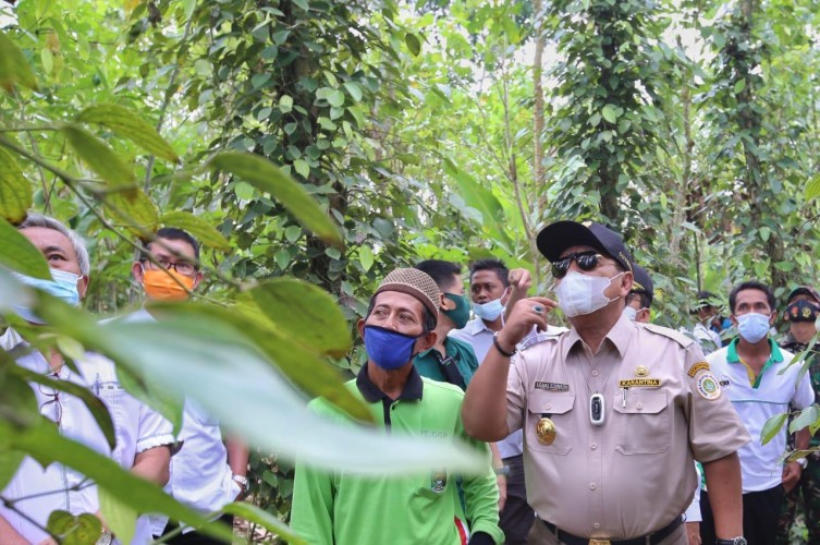 Pemprov Berupaya Pulihkan KejayaanLada Lampung