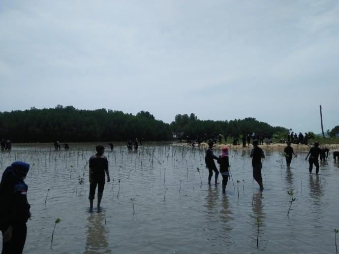 Penanaman Mangrove Dorong Pariwisata Desa Batu Menyan