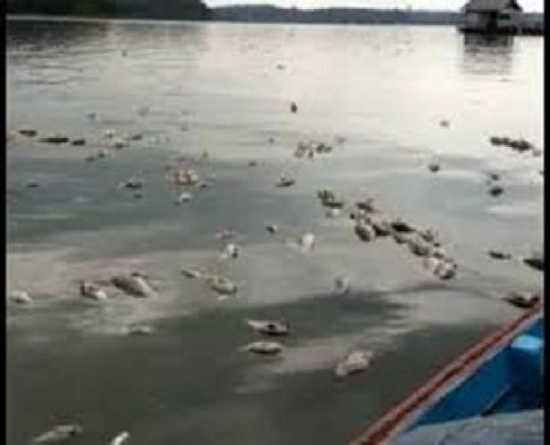 Pencemaran Way Sekampung Menunggu Hasil Uji Sampel Laboratorium DLHLampung