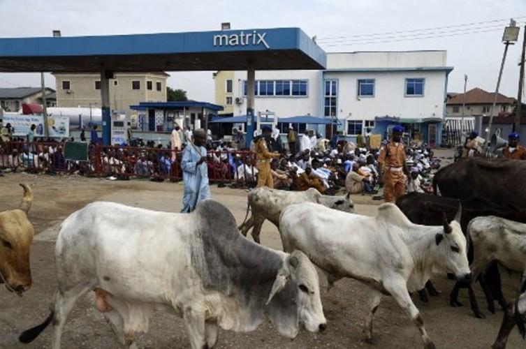 Pencuri Hewan Ternak Bantai 66 Warga Desa di Nigeria