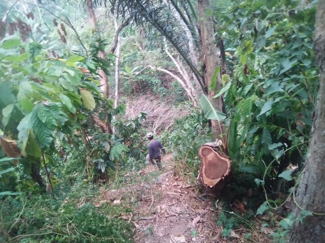 Penebangan Hutan Register 22 Way Waya Masih Terjadi